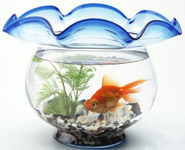 Chọn những màu cá cần nuôi