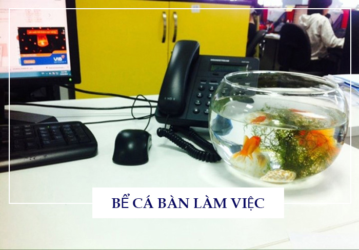 Lưu ý phong thủy bể cá cảnh tại văn phòng làm việc